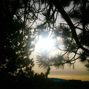 Tree Caressing Sun The Vintage lLake February 2018