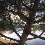 Camilla Solo Walk Vintage Lake 3.11.18 #1