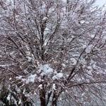Snow Vintage Lake 3.16.18 #4
