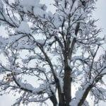 Snow Vintage Lake 3.16.18 #6
