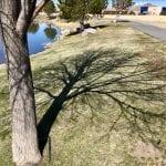 Solo Walk Vintage Lake Cherry Blossoms Shadows 3.29.18 #2