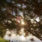 Sunset Walk with Lillian Vintage lake 5.3.18 #5