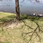 Walk with Lillian Vintage Lake Earth Day 4.22.18 #2