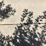 Shadows 6.19.18 #1