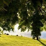 Sunset Walk Vintage Lake with Lillian 6.14.18 #4