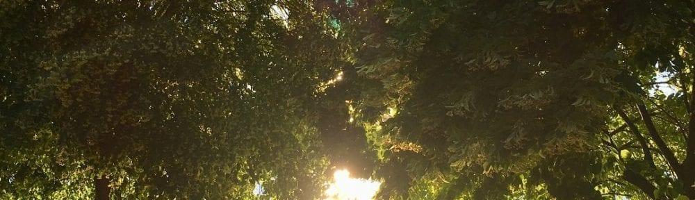 Sunset Walk with Thomas and Lillian Vintage Lake 6.27.18 #2